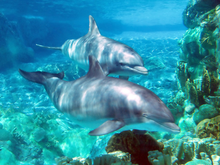 Dolphin Royal Swim at Sea Life
